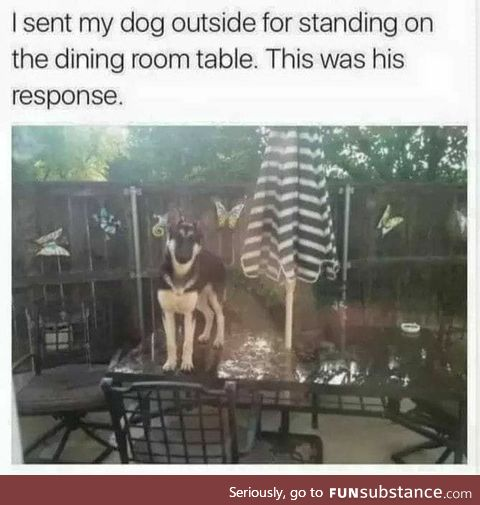 Sent dog outside for standing on the table