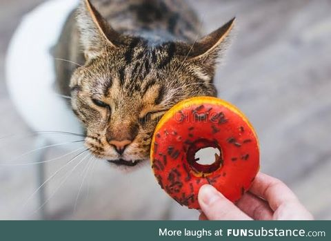 Donut the cat