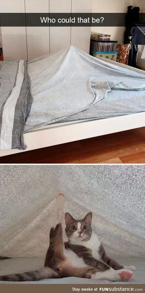 Who could it be? The animal under that sheet. Can you help me guess this mystery