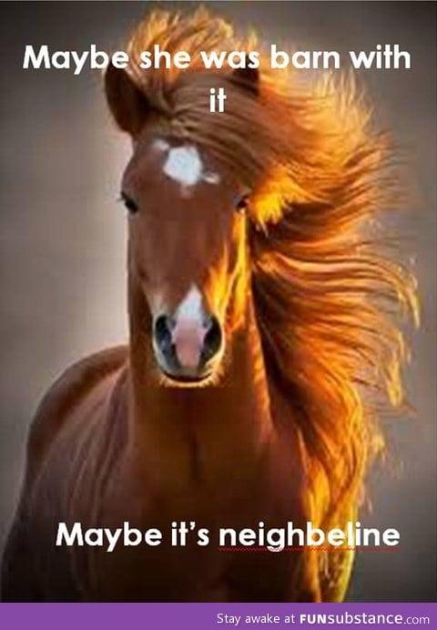 One photogenic horse