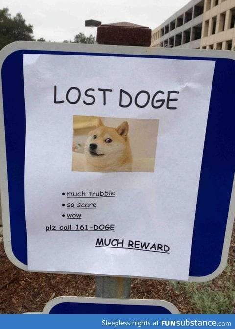 Doge is not over...yet.
