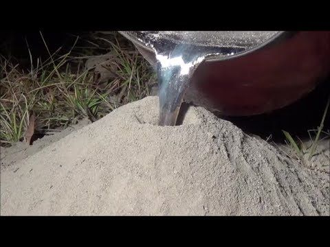 What Happens When You Pour Molten Aluminum Into An Ant Hill